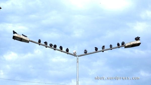 burung kusadasi