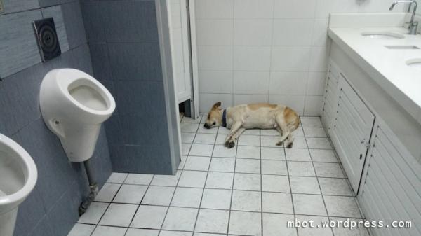 penjaga toilet